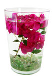 Bougainvillea stems in water Royalty Free Stock Images