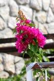Bougainvillea sterke wijnstok met roze bracteeën rond kleine witte bloemen op de traditionele achtergrond van de steenmuur stock foto's