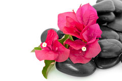 Bougainvillea and stones Royalty Free Stock Photos