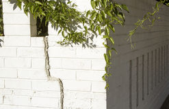 Bougainvillea Trailing over white wall Stock Image