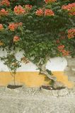 Bougainvillea tree in the village of Obidos founded by the Celts in 300 BC, Portugal Stock Photos