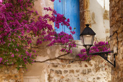 Bougainvillea on a wall Royalty Free Stock Photos