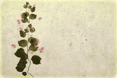 Bougainvillea on white washed plaster Royalty Free Stock Images