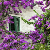 Bougainvillea and window Stock Photos