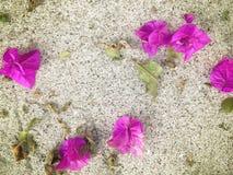Bougainvilleabloemblaadjes & Bladeren op Geweven Achtergrond Royalty-vrije Stock Afbeeldingen