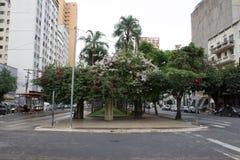 Bougainvilleablommor på den Goias avenyn, Goiania/Brasilien royaltyfri fotografi