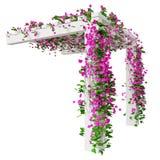 Bougainvillean blommar på pergola Arkivbilder