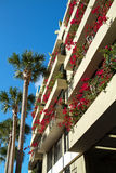 Bougainvilleas blooming on balconies Royalty Free Stock Photo