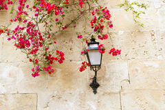 Bougainvilleas in stone wall Royalty Free Stock Image