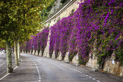 Bougainvilleas in Villefranche-sur-Mer Stock Images