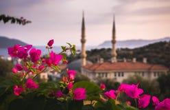 Bougainvillia i meczet, Kasa, Turcja fotografia royalty free