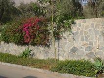 Bouganvillée au-dessus d'un mur en pierre dans Chacacayo, Lima Images libres de droits