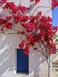 Bouganvillée de floraison Photo stock