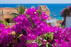 Bouganvillée rose lumineuse Image libre de droits