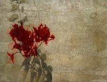 Bouganvillée rouge sur le plâtre nuageux photographie stock