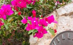 Bouganvillée violette Photographie stock libre de droits