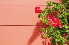 Bouganvilla auf Terra Cotta Wall Outdoor Stockfotografie