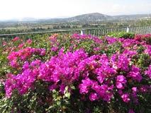 Bouganvilla-Blumen und Landschaft Lizenzfreies Stockbild