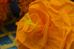 The bouganvilla mit allen seinen Dornen ist aber eine schöne Blume Stockbild