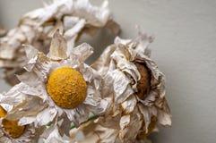 The bouganvilla mit allen seinen Dornen ist aber eine schöne Blume Lizenzfreie Stockbilder