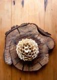 The bouganvilla mit allen seinen Dornen ist aber eine schöne Blume Lizenzfreies Stockfoto