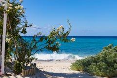 Bouganvilla am Strand, großartiger Türke Lizenzfreie Stockfotografie