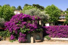 Bouganvilla und Bäume Stockbild