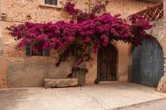 Bouganvilla vor der Tür eines Hauses Stockbilder