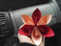 bouganvilla wszystkie piękny kwiat swój papierowi ciernie Zdjęcie Stock