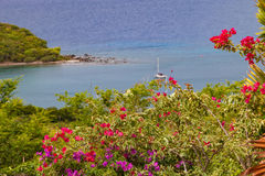 Bouganvillablumen, Antigua Lizenzfreie Stockfotos