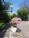 Bouganvillablumenblüte im März stockfotos