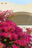 Bouganvillabusch ot der arabische Architekturhintergrund Lizenzfreie Stockbilder