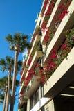 Bouganvillas, die auf Balkonen blühen lizenzfreies stockfoto