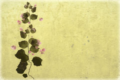 Bouganvillea on beige washed wall background royalty free stock photos