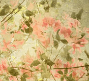 Bouganvillea del melocotón y de la aceituna Foto de archivo