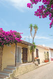 Bouganvillea by the street Royalty Free Stock Photos