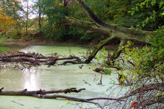 Bough in pond Royalty Free Stock Images