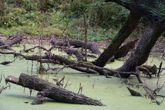 Bough in pond Stock Images