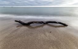 The bough in water at coast Baltic Sea. Stock Photo