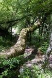 Bough wood. On mountain trail Royalty Free Stock Photos