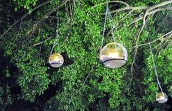 Bougie dans un verre pendant d'un arbre Images stock