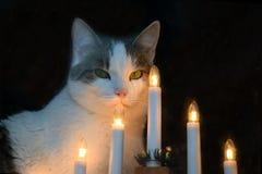Bougies de chat et de Noël Images stock