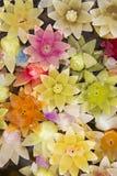 Bougies de fleur sur l'eau Photographie stock