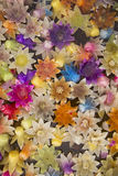 Bougies de fleur sur l'eau Photo stock