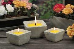 Bougies de schénanthe pour la piqûre du moustique Photo libre de droits