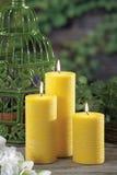 Bougies de schénanthe pour la piqûre du moustique Images stock