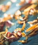 Bougies jaunes et plamennoi entourés par les pétales secs des tulipes Image stock