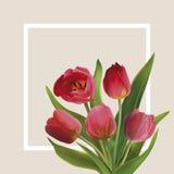 Bouguet das tulipas Imagem de Stock Royalty Free