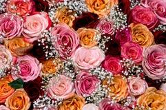Bouguet de Rosa Fotos de Stock