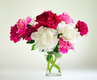 Bouguet of peonies Royalty Free Stock Photo